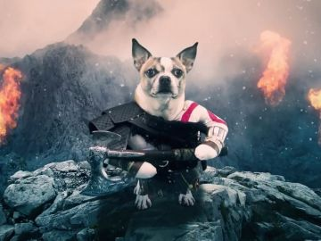 Dog of War
