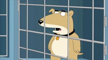 Frame 33.011992 de: Vinny Griffin, el nuevo perro de 'Padre de Familia'